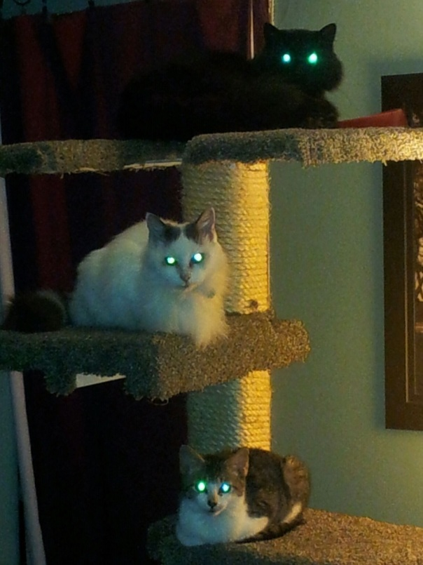 Top to bottom:  Loki, Asia and Meep.  I fear they are plotting my demise.